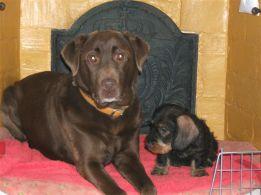Rusty & Auguste 2005