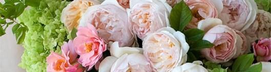 cropped-roses.jpg